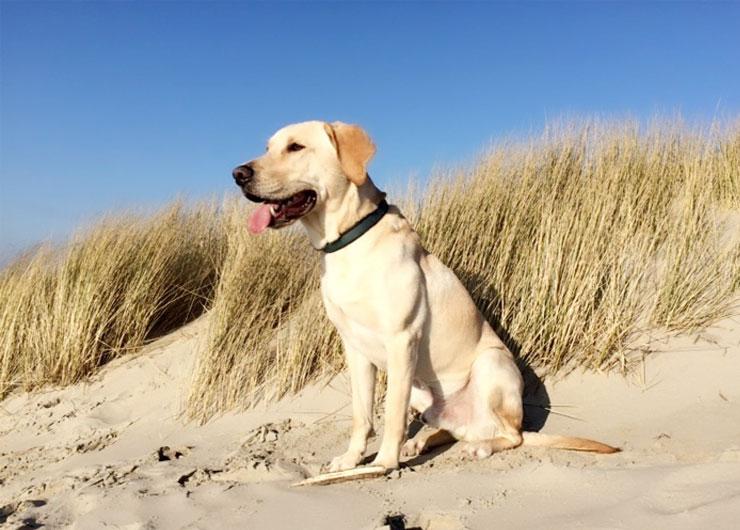 Hund in den Dünen Borkums – Ferienwohnung Chilldüne Borkum